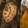 Tree clock — Foto de Stock