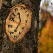 Tree clock — Stock Photo