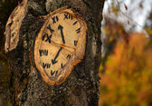 Tree clock — Stockfoto