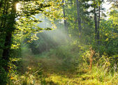 Autumn dawn in forest — Stock Photo