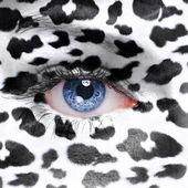Cow background — Stock Photo