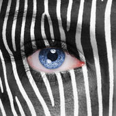 Zebra face — Stock Photo