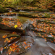 Autum river — Stock Photo #35767043
