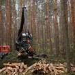 Stock Video: Cutting forest