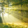 Forest dawn — Stock Photo