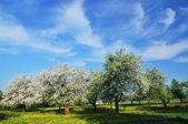 Wiosennego sadu — Zdjęcie stockowe