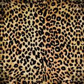 Modello leopardo — Foto Stock