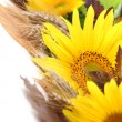 Sunflower border — Stock Photo #13608111