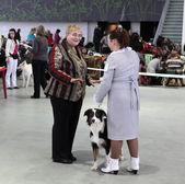 Women and dog on dog show — Stock Photo