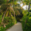 Tropical vegetation — Stock Photo #12454904