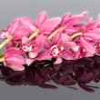 Purple cymbidium isolated on a gray mirroring background — Stock Photo #12782321
