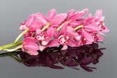 Purple cymbidium isolated on a gray mirroring background — Stock Photo