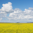 Dutch windturbines behind a yellow coleseed field — Stock Photo
