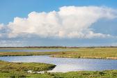 Dutch national park Oostvaardersplassen with beautiful cloudscap — Stock Photo