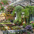 Garden center selling plants in a greenhouse — Stock Photo #13612499