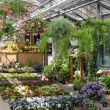 Garden center selling plants in a greenhouse — Stock Photo