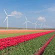 Dutch landscape with tulips and wind turbines — Stock Photo