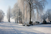 Dutch winter farmland covered with snow — Stock Photo