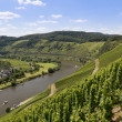 Aerial view of German river Moselle near Punderich — Stock Photo