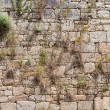 Stock Photo: Old brick wall with ivy