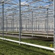 Covering of a big glass greenhouse in the Netherlands — Stock Photo