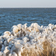 Winter sea landscape with reed covered in ice, The Netherlands - Stock Photo