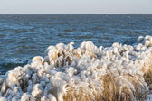 Winter sea landscape with reed covered in ice, The Netherlands — Stock Photo