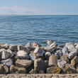 Seawall in Netherlands made from big basalt rocks — Stock Photo #29468723