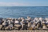 Seawall in the Netherlands made from big basalt rocks — Stock Photo