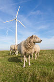 Sheep at a dike along a row of wind turbines — Stock Photo