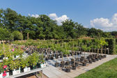 Holandés centro de jardinería venta de plantas — Foto de Stock