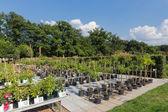 Hollandalı bahçe merkezi tesisleri satış — Stok fotoğraf