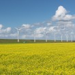 Dutch countryside landscape with rapeseed and wind turbines — Stock Photo