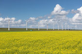 Dutch countryside landscape with rapeseed and wind turbines — Foto de Stock