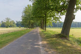 Dutch landscape with paving stone country road and trees — Stock Photo