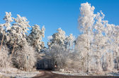 Country road through snowy wood — Stockfoto