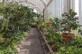 Tropical greenhouse with plants and cactuses — Stock Photo