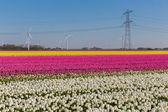 Dutch tulip field with wind turbines and a power pylon — Foto Stock