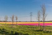 Dutch tulip field with wind turbines and a power pylon — Stock Photo
