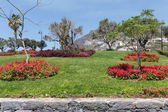 Garden with salvia at Funchal, Madeira Island, Portugal — Stock Photo