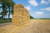 Dutch farmland with haystack at harvested wheat field — Stock Photo