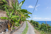 Banana plantation along the coast beneath the cliffs of Madeira Island, Portugal — Stock Photo