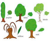 Arbres à feuilles caduques — Vecteur