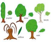 árvores de folha caduca — Vetorial Stock