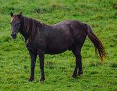 A bay horse on the meadow — Zdjęcie stockowe
