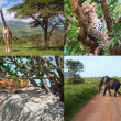 Safari in Africa. set of wild animals. - Stock Photo