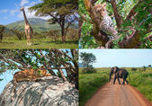 Safari in Africa. set of wild animals. — Stock Photo