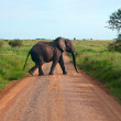 Single elephant walking on a road  — Stock Photo