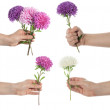 Hand holding pink set of chrysanthemum — Stock Photo