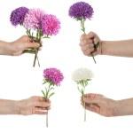 Hand holding pink set of chrysanthemum — Stock Photo